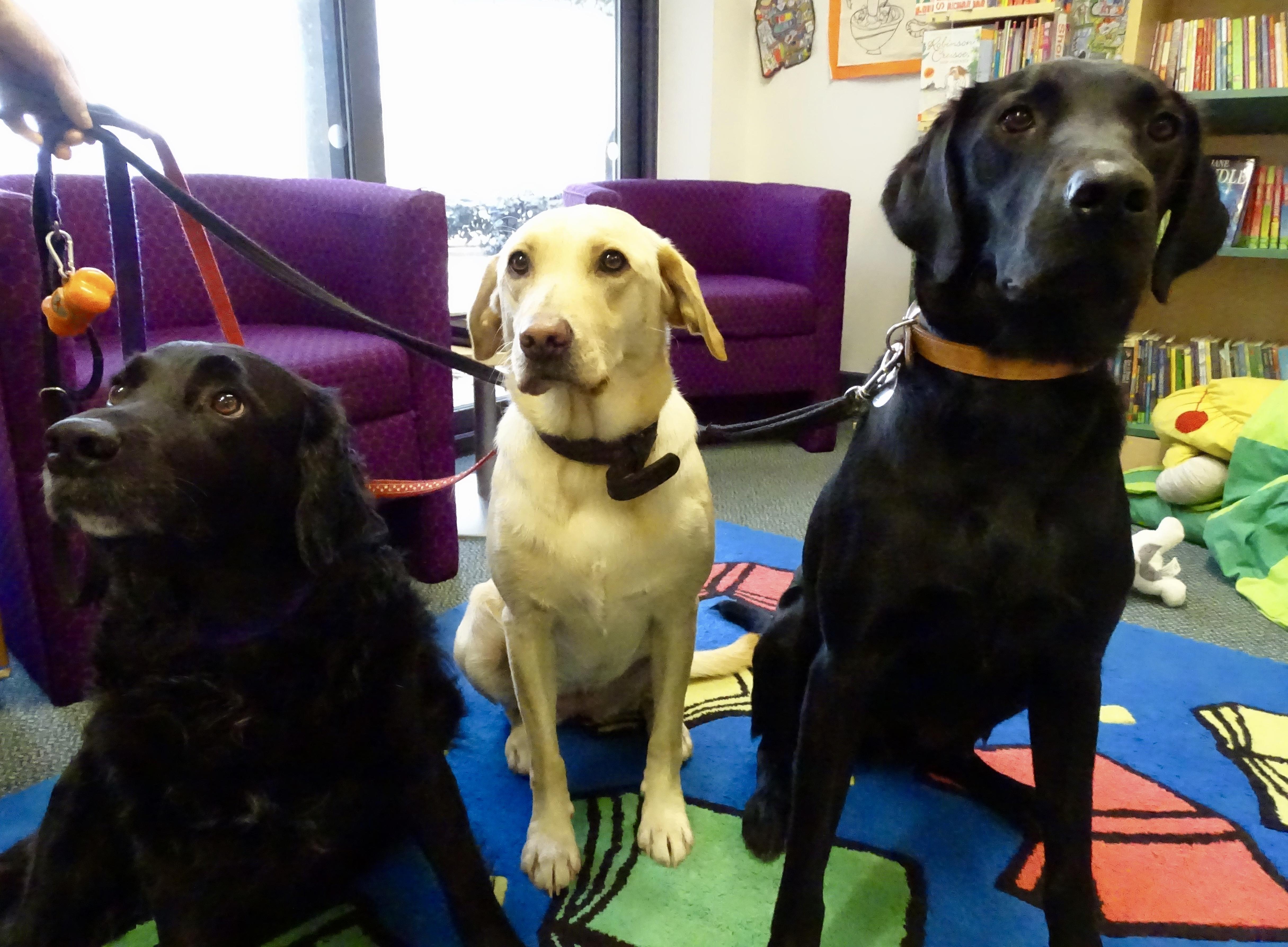 Queens Hill Primary School School Dogs