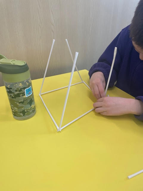 Stick insects and 3D shapes